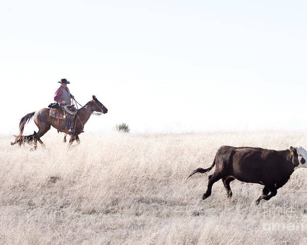 Cowboy Poster featuring the photograph Cattle Drive by Cindy Singleton