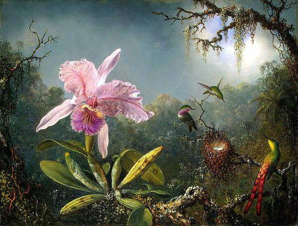 Cattleya Orchid And Three Brazilian Hummingbirds Poster featuring the digital art Cattleya Orchid And Three Brazilian Hummingbirds by Emile Munier
