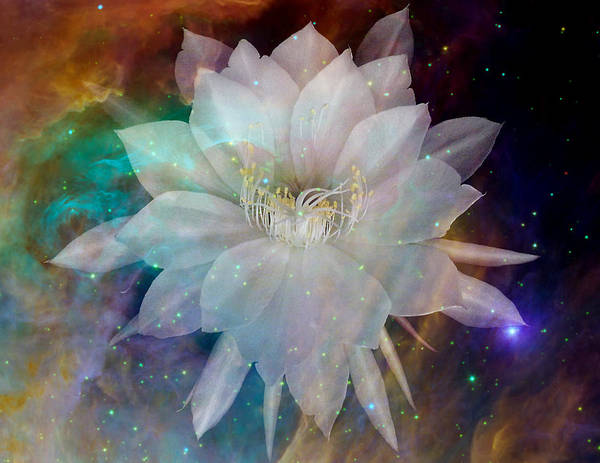 Cereus Poster featuring the photograph Cereus Chaos by Tanya Hamell