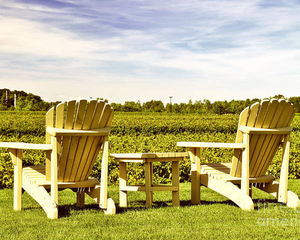 Vineyard Poster featuring the photograph Chairs Overlooking Vineyard by Elena Elisseeva