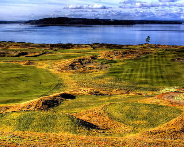 Chambers Bay Golf Course Poster featuring the photograph Chambers Bay Lone Tree by David Patterson