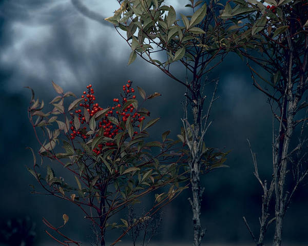 Nature Photography Poster featuring the photograph Change Of Season by Bonnie Bruno