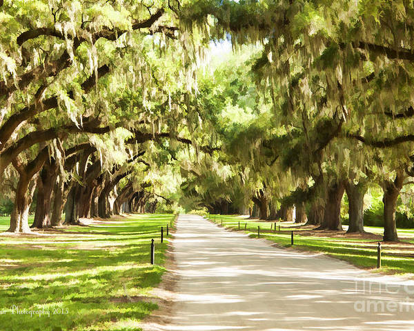 Oak Trees Poster featuring the photograph Charleston by Linda Blair