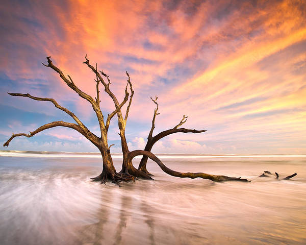 Charleston Poster featuring the photograph Charleston Sc Sunset Folly Beach Trees - The Calm by Dave Allen
