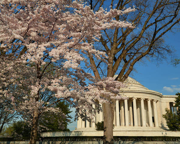 Architectural Poster featuring the photograph Cherry Blossoms 2013 - 048 by Metro DC Photography