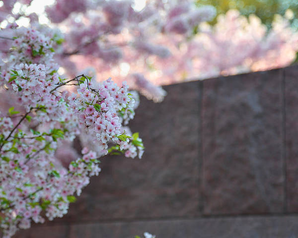 Architectural Poster featuring the photograph Cherry Blossoms 2013 - 066 by Metro DC Photography