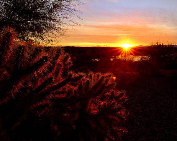 Cholla Poster featuring the photograph Cholla On Fire by Kelly Gibson
