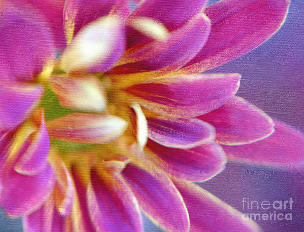 Hot Pink Daisy Poster featuring the photograph Chrysanthemum Painting by Irina Wardas