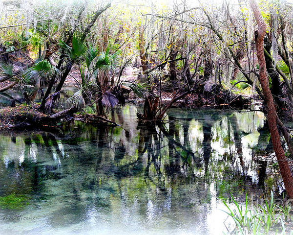 Springs Poster featuring the photograph Clear Florida Springs by Carol Groenen