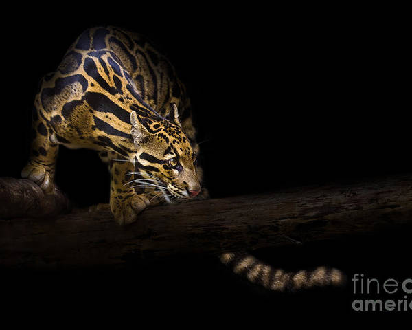 Apex Predator Poster featuring the photograph Clouded Existence by Ashley Vincent