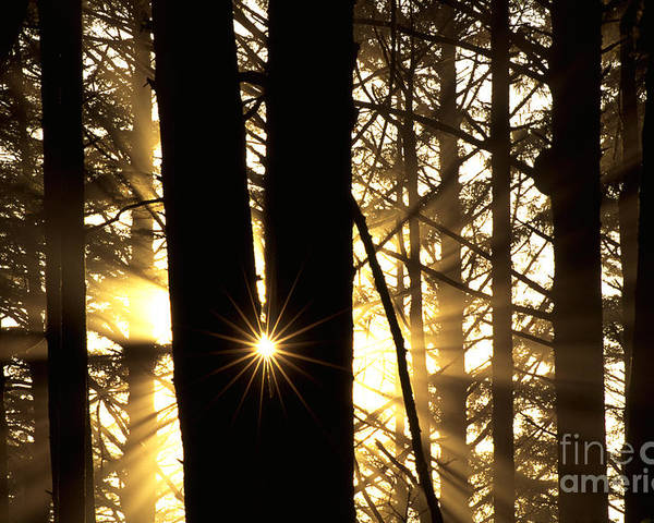 Coastal Forest Poster featuring the photograph Coastal Forest by Art Wolfe
