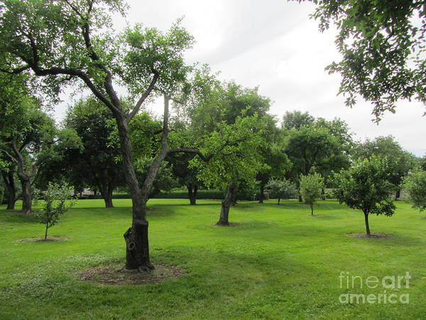 Orchard Poster featuring the photograph Colonial Apple Orchard by Susan Carella