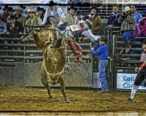 Bullrider Poster featuring the photograph Coming Off by Alice Gipson