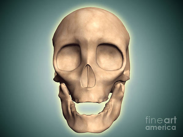 Eye Sockets Poster featuring the digital art Conceptual Image Of Human Skull, Front by Stocktrek Images