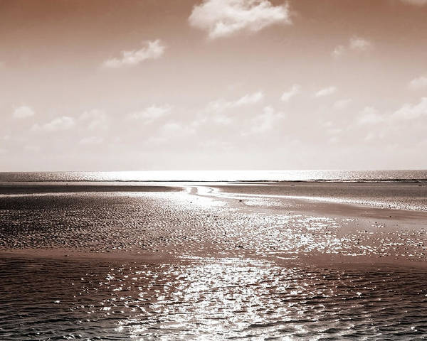 Beach Poster featuring the photograph Copper Beach by Andy Readman