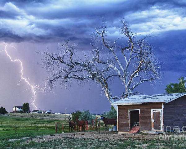 Country Poster featuring the photograph Country Horses Lightning Storm Ne Boulder County Co Hdr by James BO Insogna