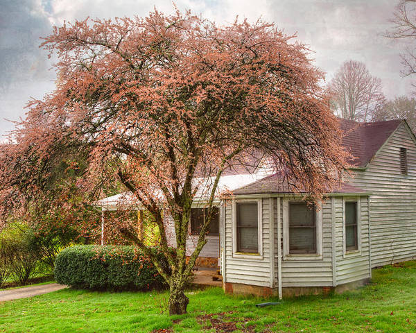 Appalachia Poster featuring the photograph Country Pink by Debra and Dave Vanderlaan