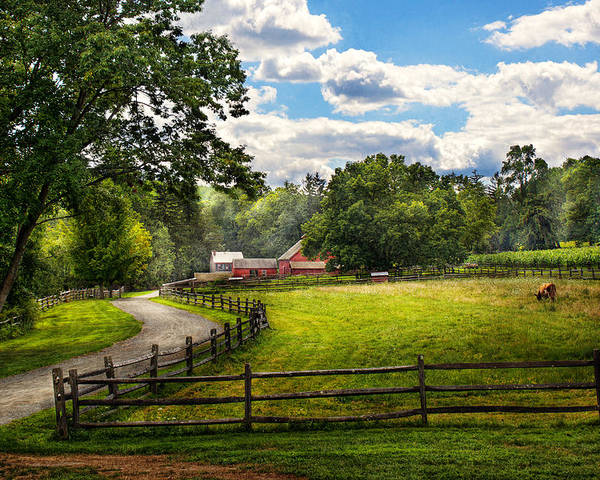 Cow Poster featuring the photograph Country - The Pasture by Mike Savad