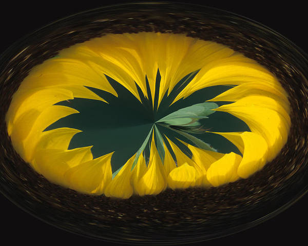 Daisy Poster featuring the photograph Daisy Abstract by Keith Gondron