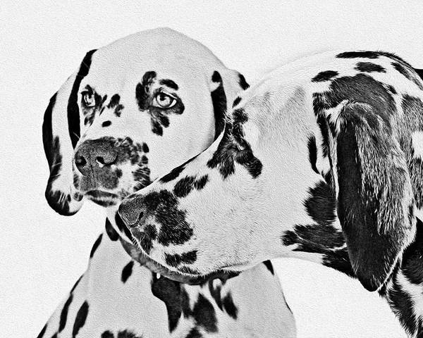 101 Poster featuring the painting Dalmatians - A Great Breed For The Right Family by Christine Till
