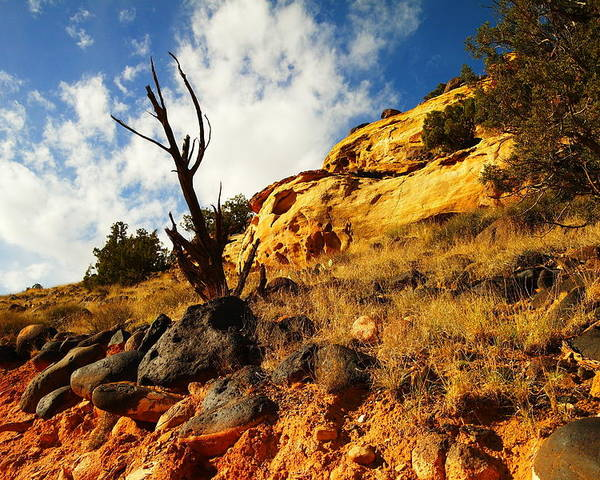 Rocks Poster featuring the photograph Dead Tree Against The Blue Sky by Jeff Swan