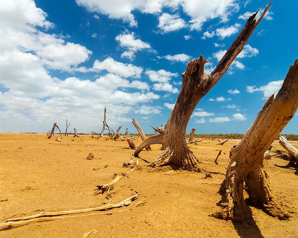 Desert Poster featuring the photograph Dead Trees In A Desert Wasteland by Jess Kraft