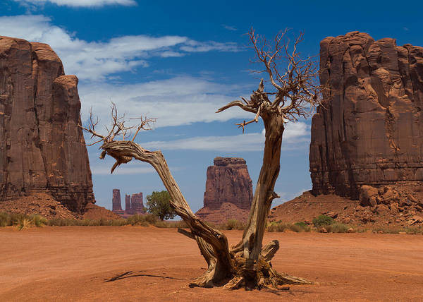 Dead Poster featuring the photograph Dead Wood In Monument Valley by Andreas Hohl