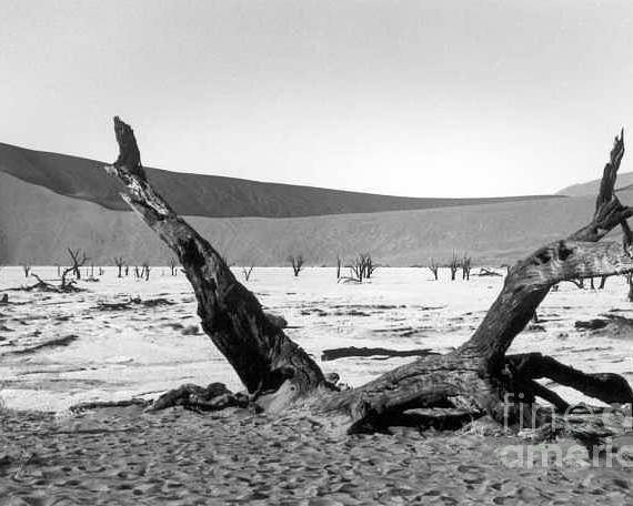 Acacia Trees Poster featuring the photograph Deadvlei by Susan Chandler