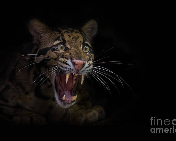 Angry Poster featuring the photograph Deceptive Expressions by Ashley Vincent