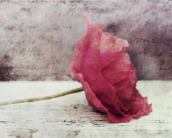 Poppy Poster featuring the photograph Decor Poppy Horizontal by Priska Wettstein