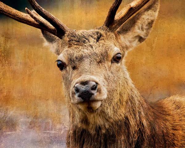 Alert Poster featuring the photograph Deer On Canvas by Derek Beattie