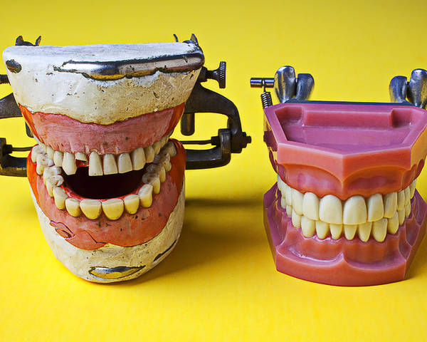 Dental Models Poster featuring the photograph Dental Models by Garry Gay