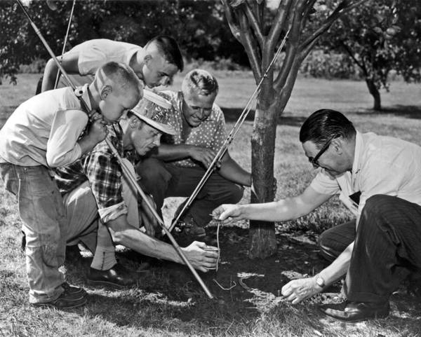 1954 Poster featuring the photograph Digging Worms For Fishing by Underwood Archives