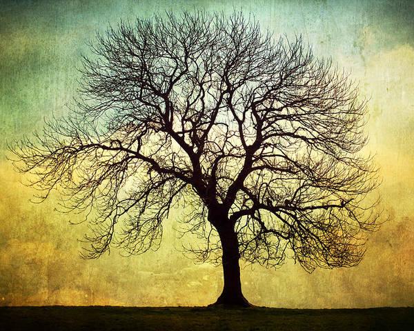Digital Art Poster featuring the photograph Digital Art Tree Silhouette by Natalie Kinnear