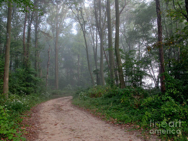 Path Poster featuring the photograph Dirt Path In Forest Woods With Mist by Olivier Le Queinec