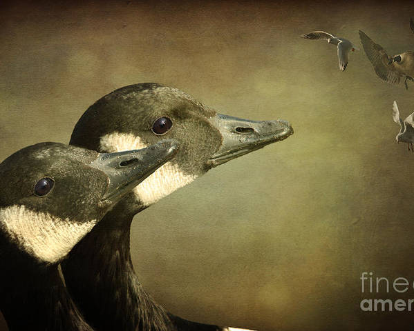 Goose Poster featuring the photograph Distant Friends by Wobblymol Davis