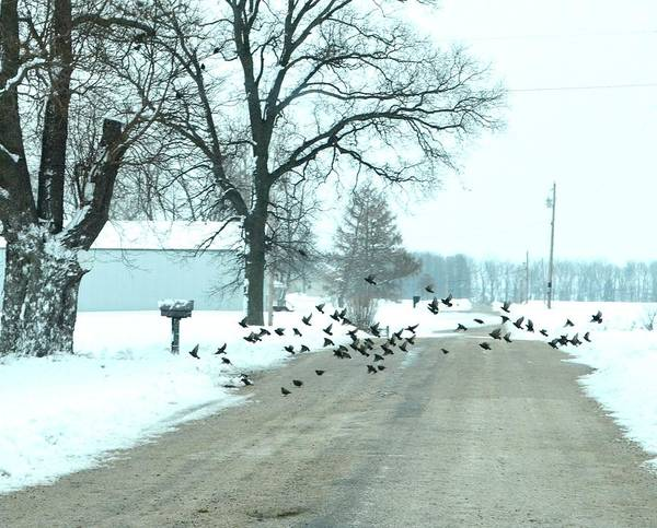Indiana Winters Poster featuring the photograph Disturbing The Flock by Julie Dant