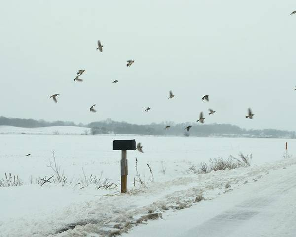 Winter Poster featuring the photograph Disturbing The Winter Foragers by Julie Dant