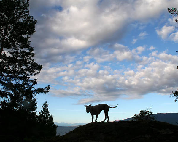 Dog Poster featuring the photograph Dog And Sky by Peggy Collins