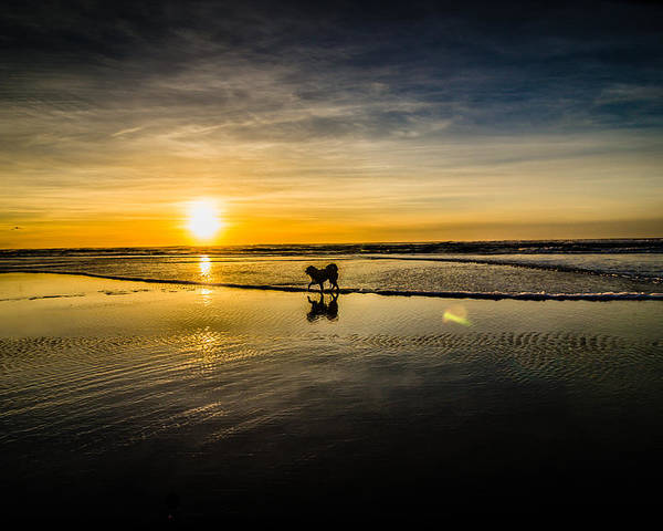Beach Poster featuring the photograph Doggy Sunset by Puget Exposure