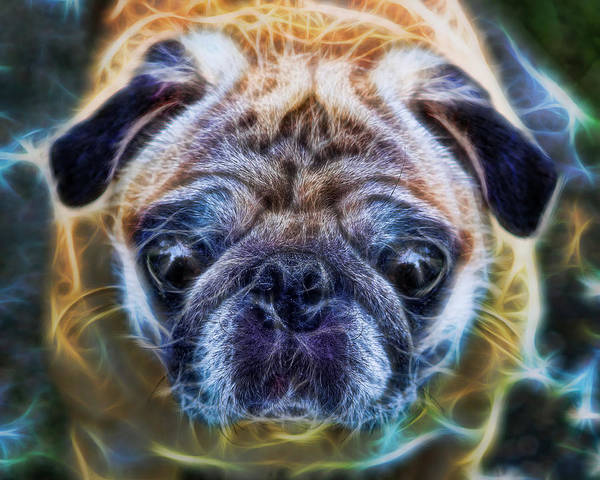 Interior Decoration Poster featuring the photograph Dogs - The Psychedelic Fantasy Pug by Lee Dos Santos