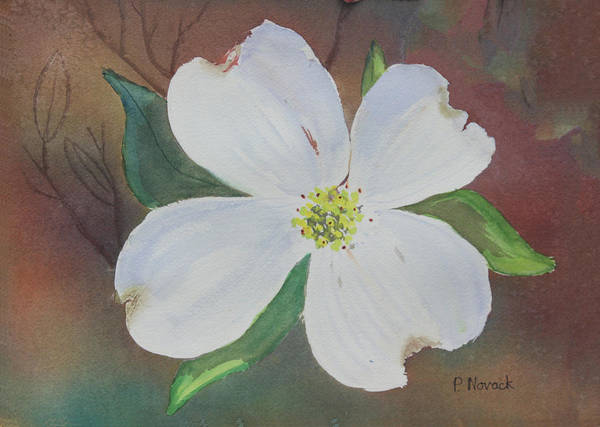 Dogwood Poster featuring the painting Dogwood Blossom by Patricia Novack