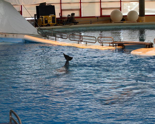 Inner Poster featuring the photograph Dolphin Show - National Aquarium In Baltimore Md - 1212142 by DC Photographer