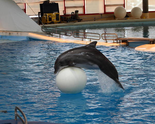 Inner Poster featuring the photograph Dolphin Show - National Aquarium In Baltimore Md - 1212160 by DC Photographer