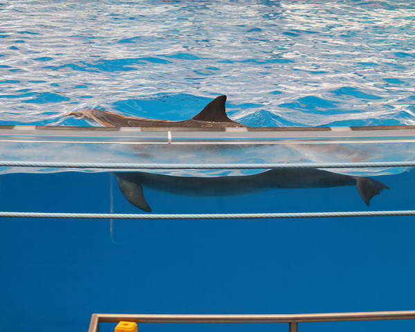 Inner Poster featuring the photograph Dolphin Show - National Aquarium In Baltimore Md - 1212173 by DC Photographer