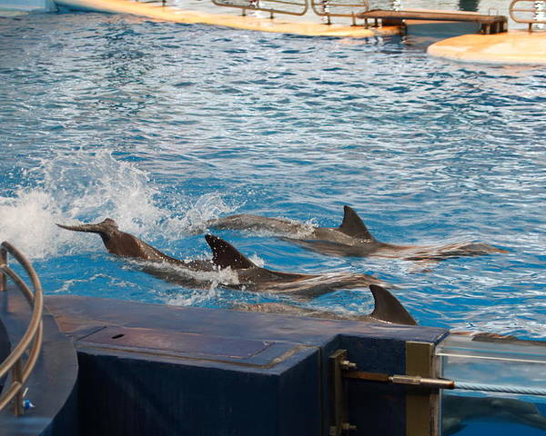 Inner Poster featuring the photograph Dolphin Show - National Aquarium In Baltimore Md - 1212187 by DC Photographer