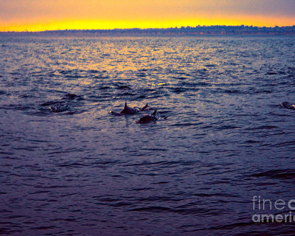 Dolphins Poster featuring the photograph Dolphins At Sunset by Loretta Jean Photography