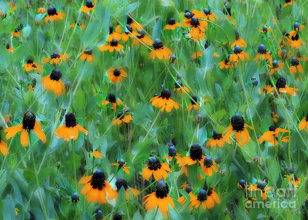 Flowers Poster featuring the photograph Dreaming In Orange by Judi Bagwell
