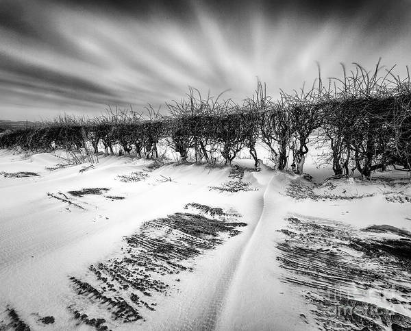 Black And White. Mono. Monochromatic Poster featuring the photograph Drifting Snow by John Farnan