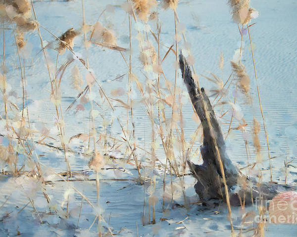 Beach Poster featuring the photograph Driftwood Abstract by Betty LaRue